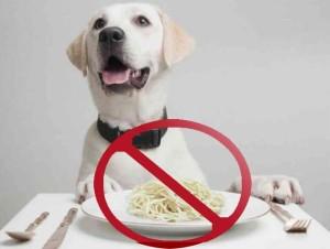 Не кормите собаку перед УЗИ исследованием!