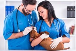 vizov veterinara